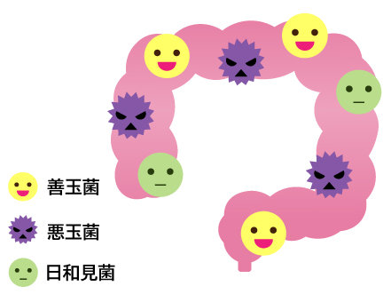 腸1.jpg