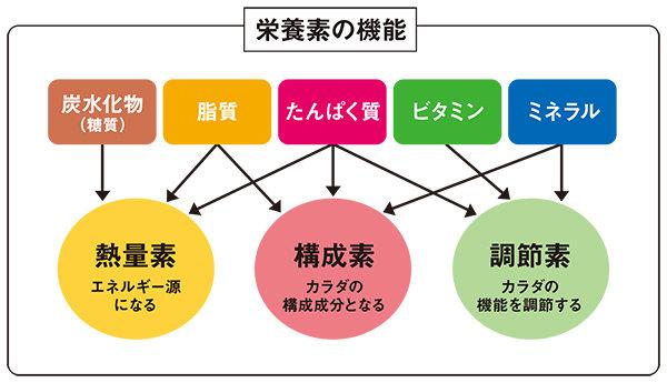 1-eiyoukinou.jpg