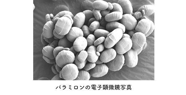 パラミロンの電子顕微鏡写真